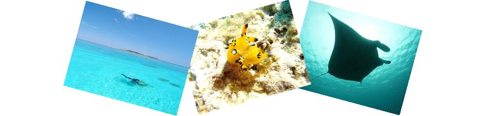 石垣島海と陸の1年