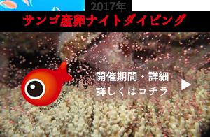 サンゴ産卵ナイトダイビング