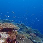 "<span class=""title"">サンゴの美しいポイントでした (@_@;)</span>"