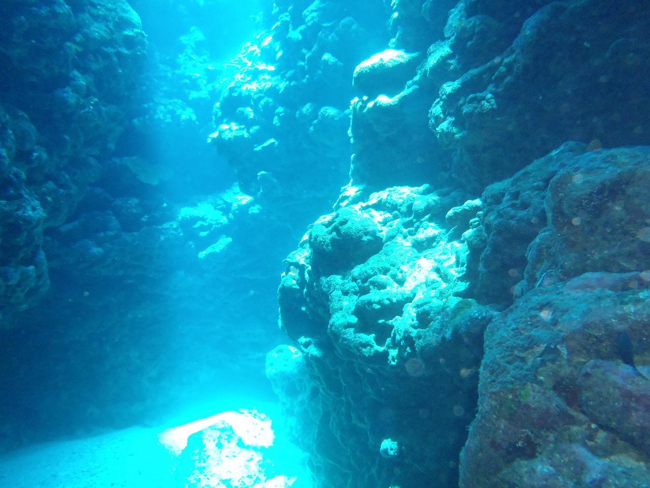 透明感バツグンの水中画像集